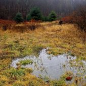 Sandgate Vermont: Fall Pond - Landscape Photography