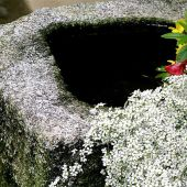 Kyoto, Japan: Stone basin and flowers, Temple - Landscape Photography